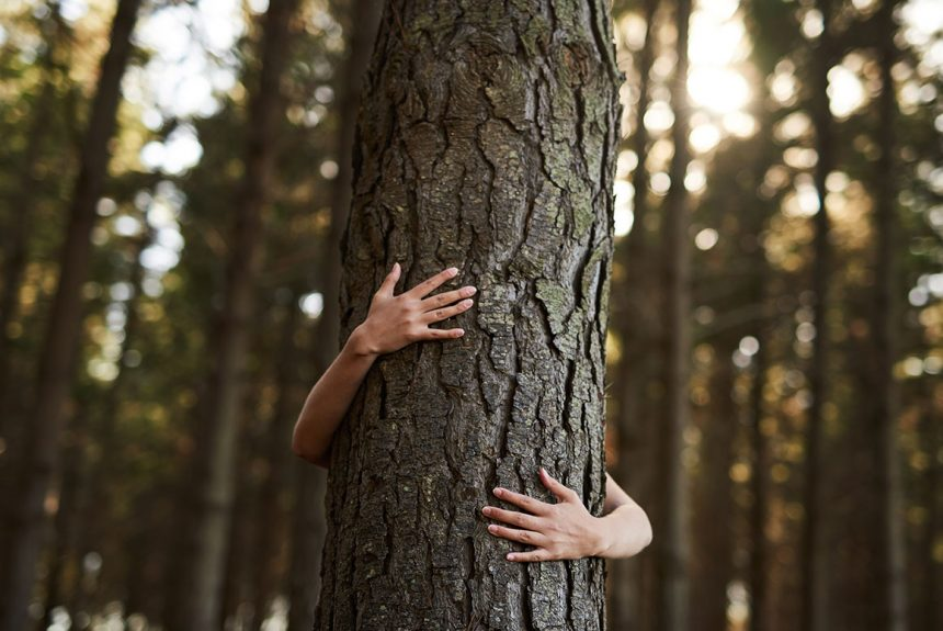 Hug a Tree, They Have Less Issues  than People