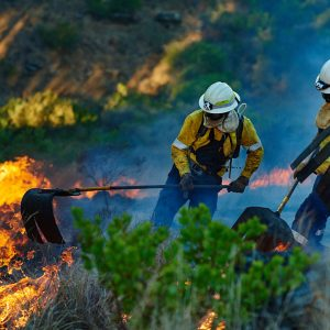 Huge Wildfire: Do You Hear the Trees  Falling?